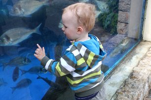 Aquarium in Palma: viele Fische drin © PamiP