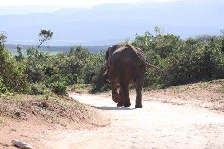 Elefanten haben Vorfahrt © Kerstin