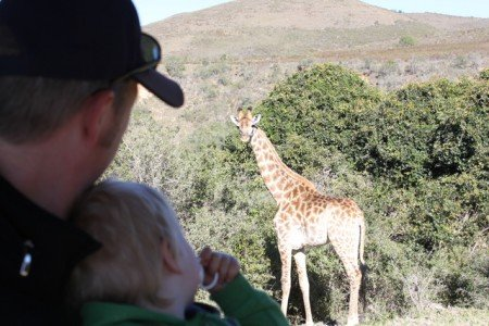 Aug in Aug mit einer Giraffe (Jeepsafari im Buffalo Hills Game Reserve)