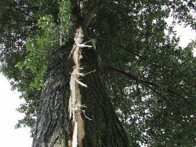 Ein vom Blitz gesprengter Baum