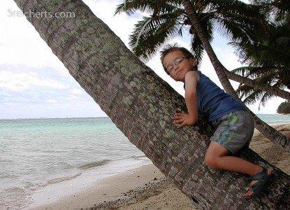 Noah fand die Palmen auf Rarotonga besonders gut