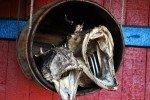 Lofoten Fisch © Nordicfamily