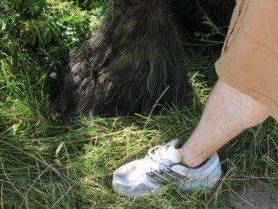 Huf auf Fuß - das könnte bei Kaltblütern böse enden
