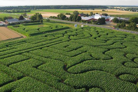 Dieses Maislabyrinth liegt am Erdbeerhof Münch im Odenwald