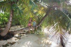Tropenparadies mit Palmen - die Seychellen halten Wort