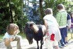 Den Tieren im Streichelzoo ganz nah kommen © Familienhotel Sonnwies