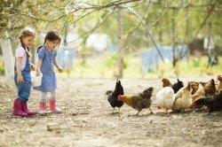 Das Füttern von Tieren macht den meisten Kindern Spaß