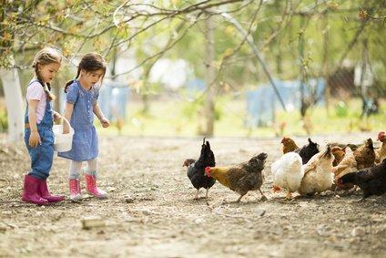 Das Füttern von Tieren macht den meisten Kindern Spaß © Boggy - Fotolia.com
