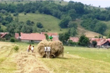 Familien-Landwirtschaft in Rumänien