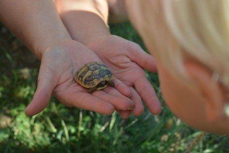 Biologieunterricht live in der Schildkrötenauffangstation