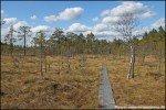 Wanderung im Kärnskogsmossen Naturreservat, Östergötland, Schweden © Nicky2
