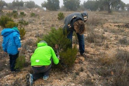 Wir suchen unseren Weihnachtsbaum in der Weite Spaniens