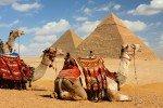 Kamele vor den Pyramiden in Ägypten © Fairaway