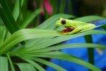 Unglaubliche Tierwelt © CostaRicamitKind