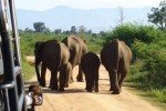 Jeepsafari im Ude Walawe Nationalpark, Sri Lanka © FerienGlück