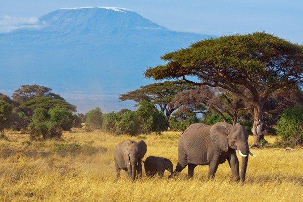 Diese Elefantenfamilie kann Ihnen im Nationalpark begegnen