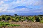 Zebras entdecken am Fuße des Kilimanjaros © Fairaway