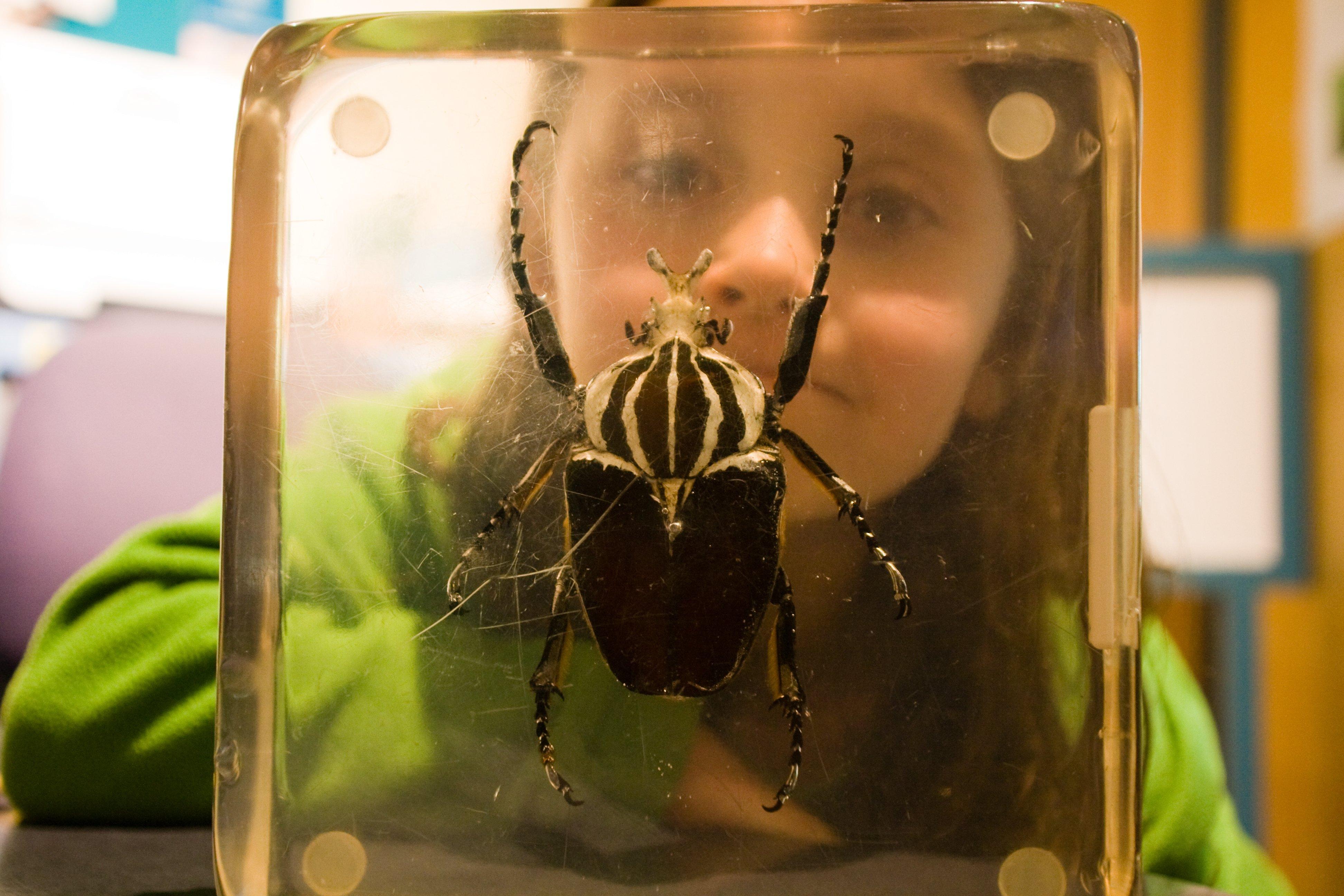 Kleiner Käfer ganz groß © Weltwunderer
