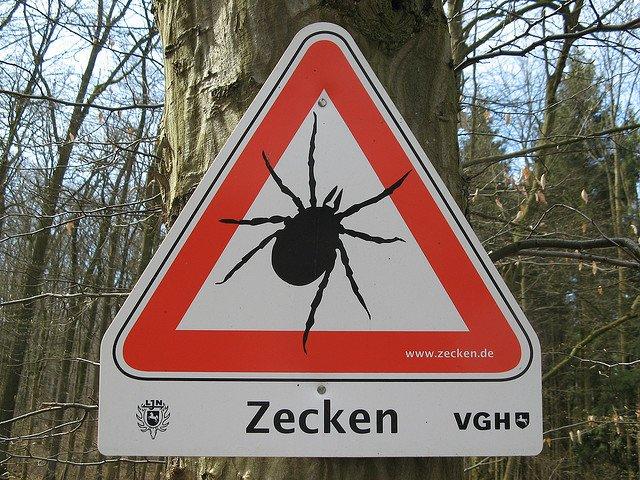 Zeckenalarm! © m.prinke/FlickR