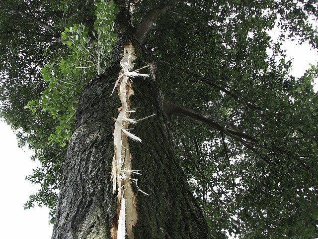 Ein vom Blitz gesprengter Baum © FlickR/hans s