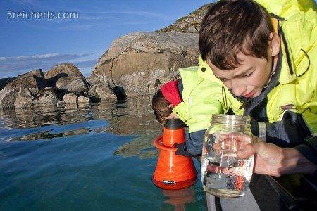 Mit der Walforscherin Heike Vester suchen wir Wale und finden Plankton © Gabi Reichert