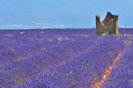 unendliches Lavendellila © kh143