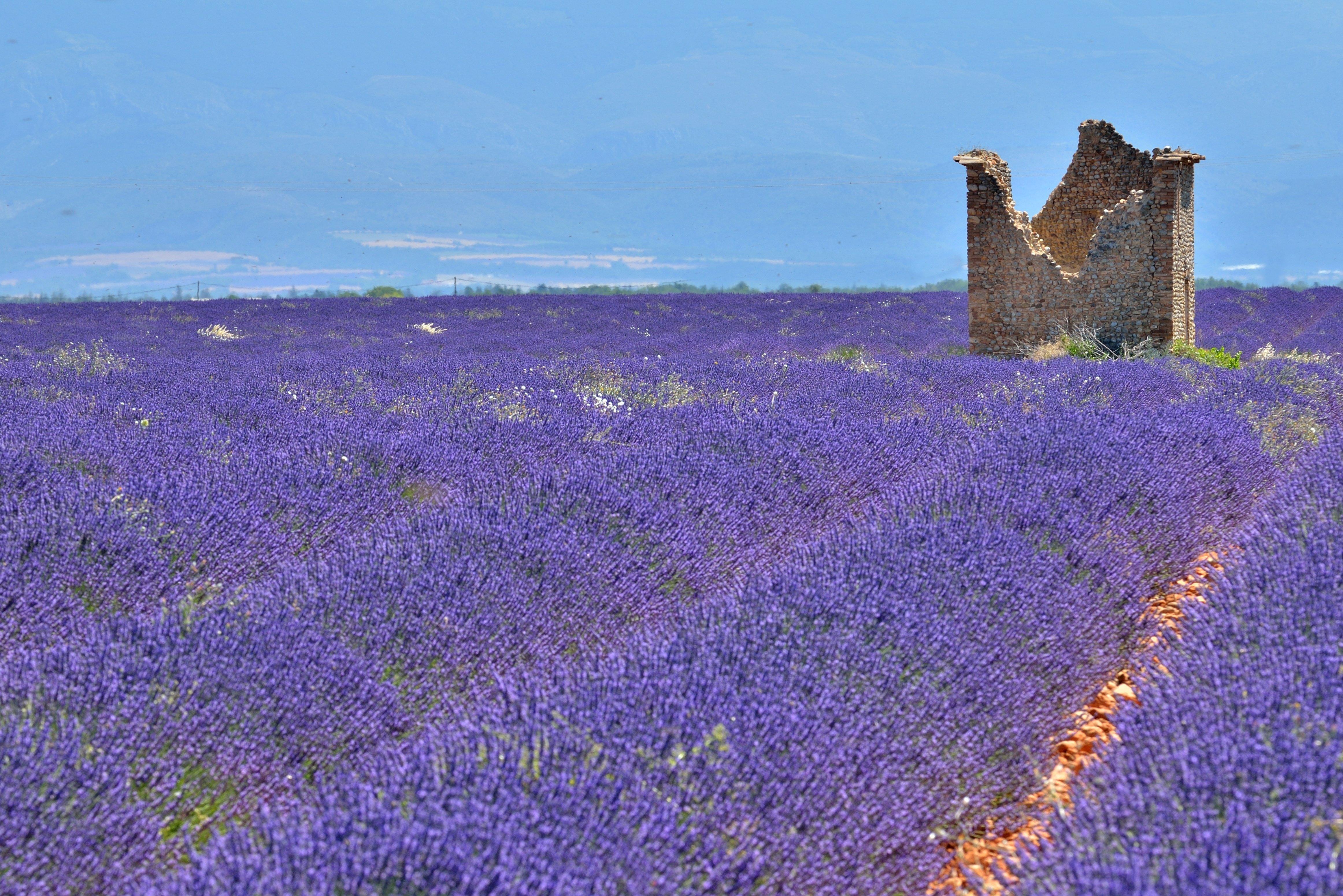 unendliches Lavendellila