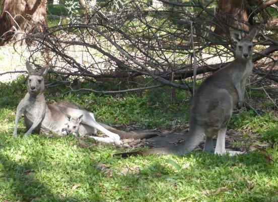 Insidertipps für eine Reise mit Kindern nach Australien