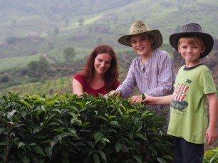 ... oder selbst Tee pflücken. © Familie Lilienthal