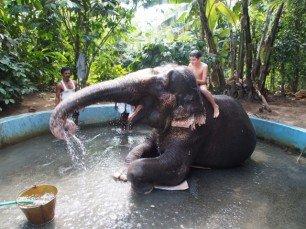 ... einen Elefanten waschen ... © Familie Lilienthal