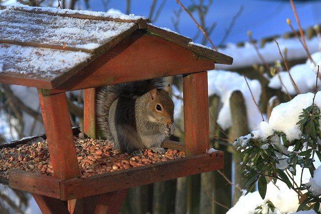 Die Tiere freuen sich im Winter besonders über Futter © Flickr/Pete98