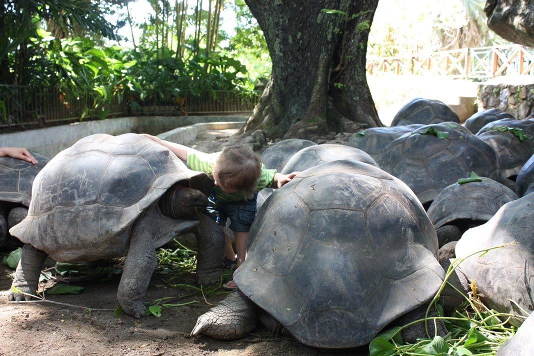 Jung und Alt treffen sich auf La Curieuse (das Foto entstand allerdings im Botanischen Garten auf Mahé) © www.flind.de