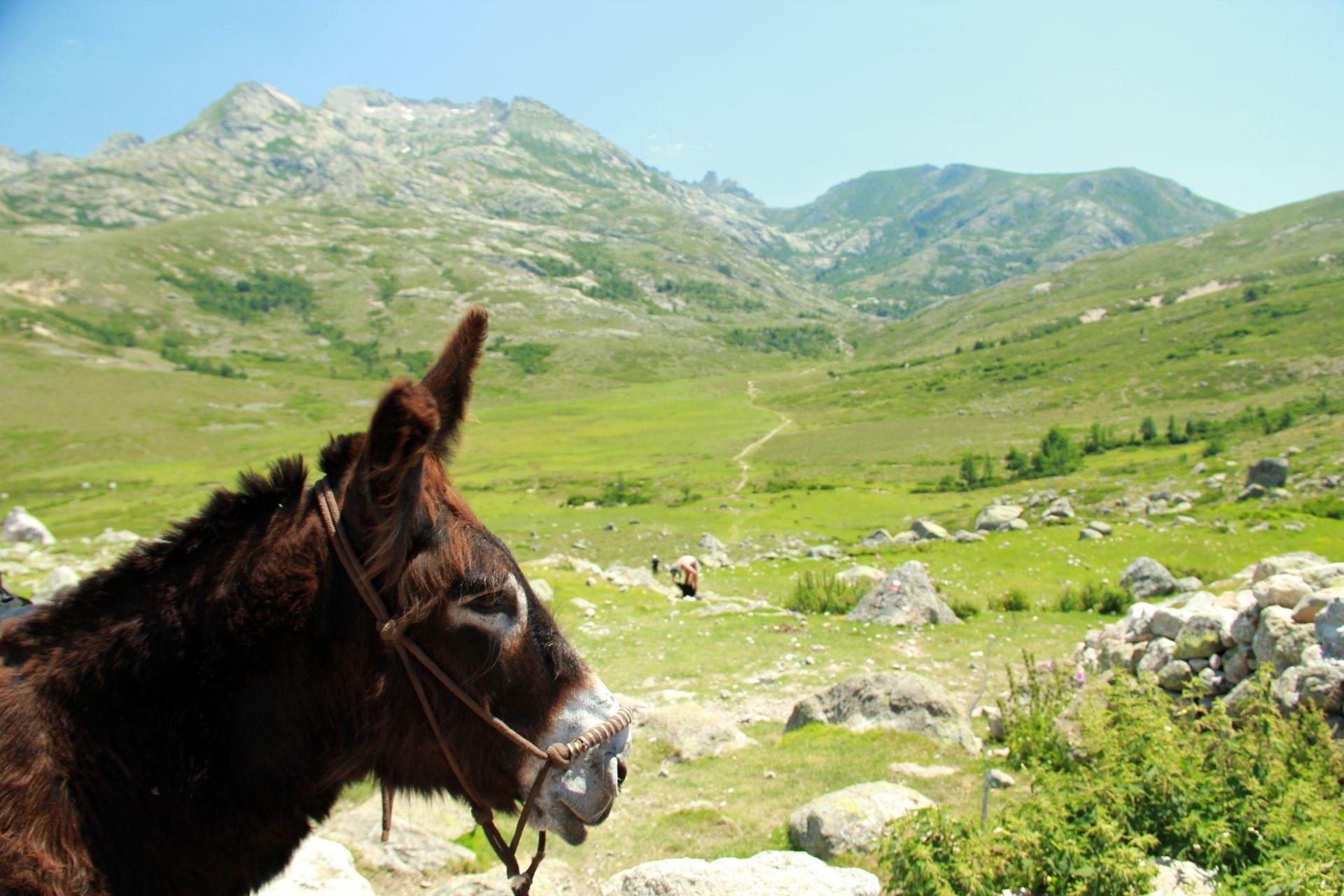 Esel Bronco vor korsischer Idylle © Christine Hutterer