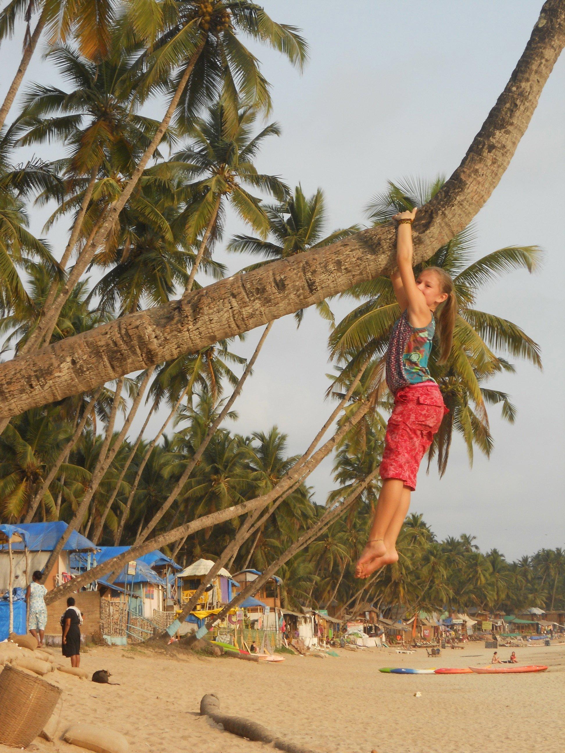 Goa mit Kletteräffchen © larsdani