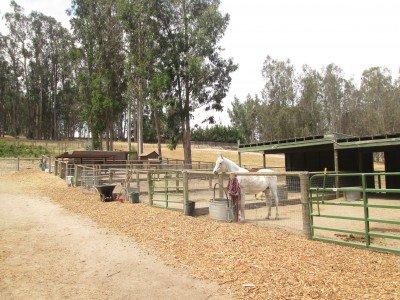 "Die ""Sweet Pea Farm"" in Arroyo Grande/Kalifornien © Kristin Schuster"