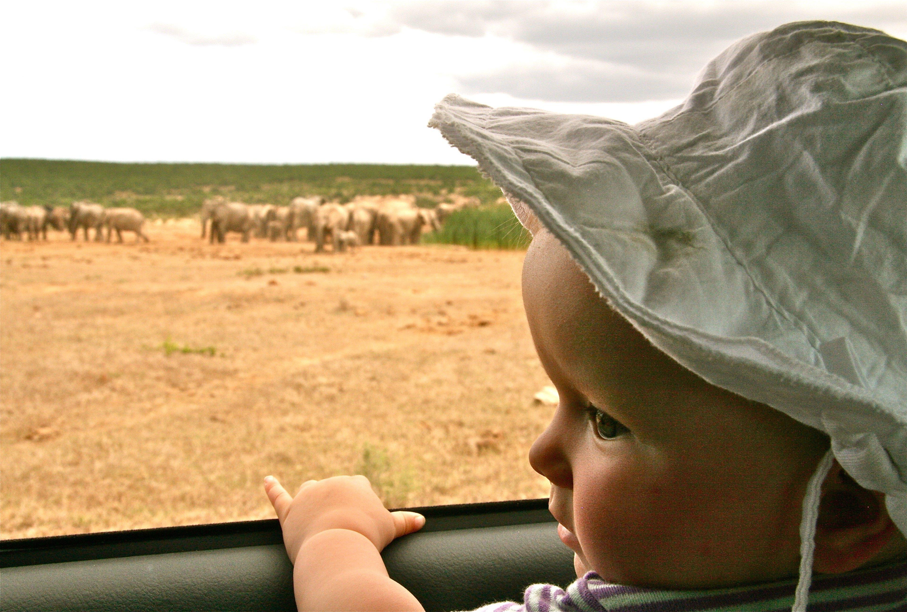 In Südafrika können schon die Kleinsten auf Safari gehen. © Susanne Frank
