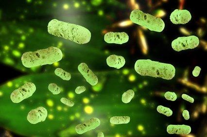 Salmonellen: wie ihr eure Kinder auf Reisen davor schützen könnt