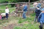 Urlaub auf dem Bauernhof © Bambino-Tours