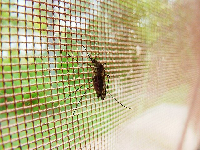 Mückenschutz ist auf Reisen immer wichtig © Pixabay
