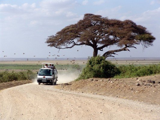 Mit Kindern auf Safari gehen – die wichtigsten Tipps