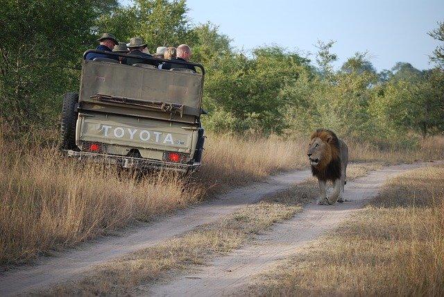 Auch wenn es gefährlich aussieht - Safaris sind sicher © Pixabay