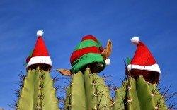 An Weihnachten verreisen oder daheim bleiben?