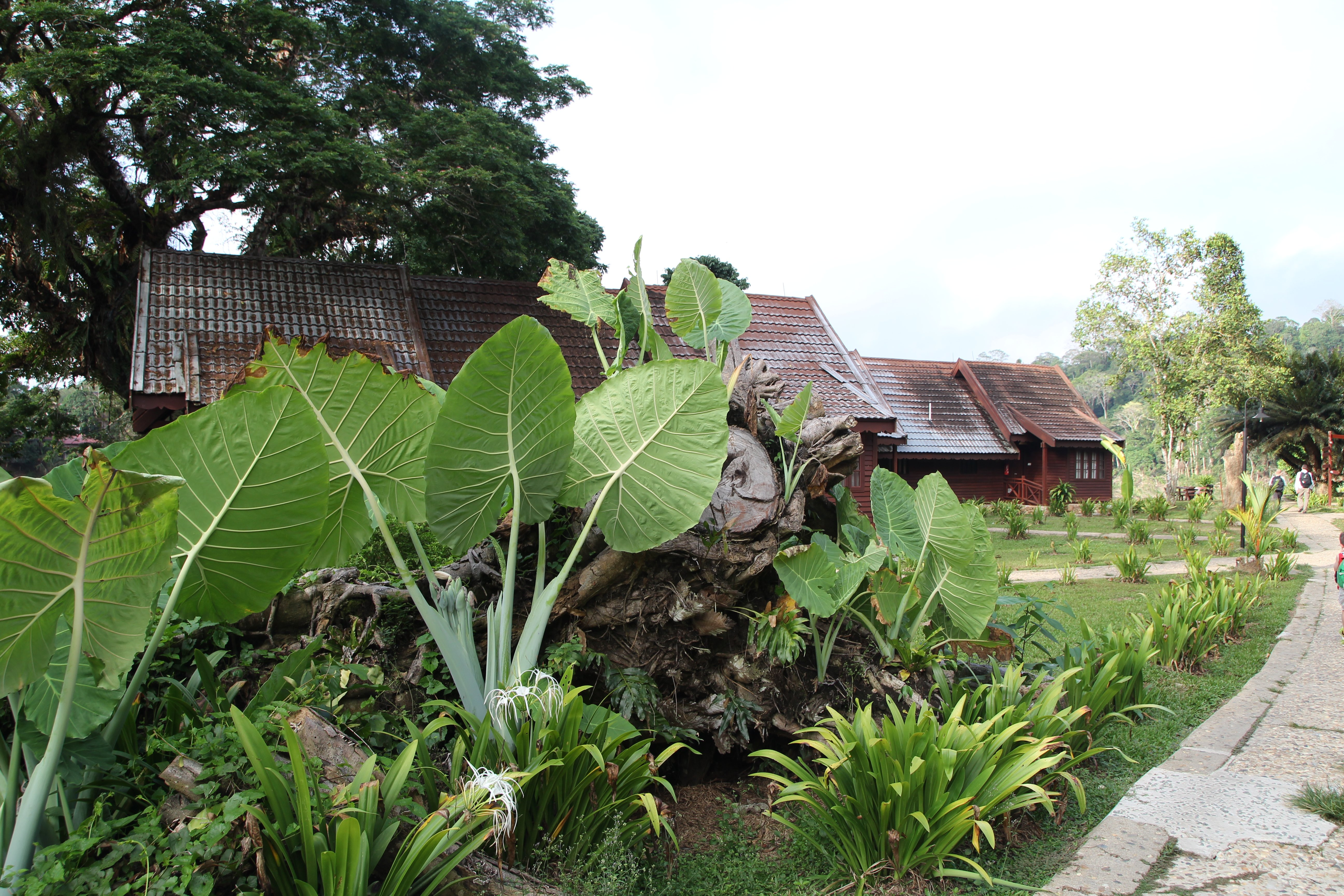 Eine Regenwald-Tour in Malaysia ist ein echtes Abenteuer © www.flind.de