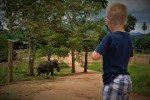 Elefantenwaisenhaus © EquinoX