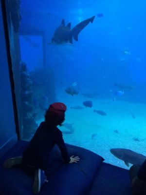 Aquarium Palma de Mallorca Familienurlaub Kinder