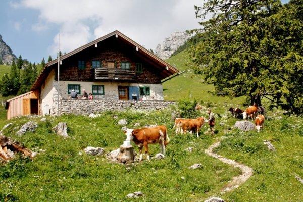 Agrotourismus: Was ihr über die speziellen Ferien auf dem Bauerhof wissen müsst